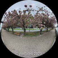 PANO_20200429_130132